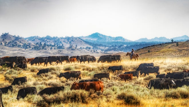 Former state Rep. Don Roberts has been accused of cattle abuse on his Montana ranch.