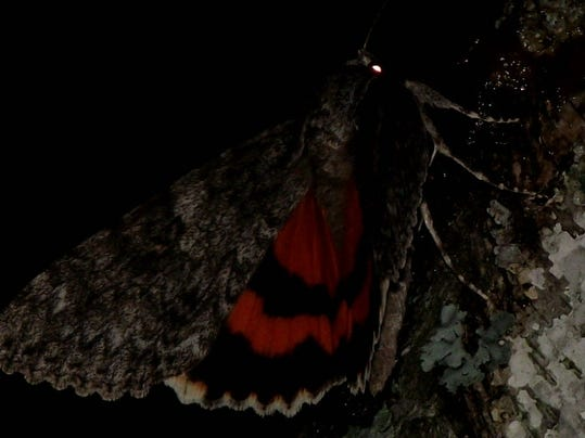 APC 081514 Yard MD BLOG-Moths night out.JPG