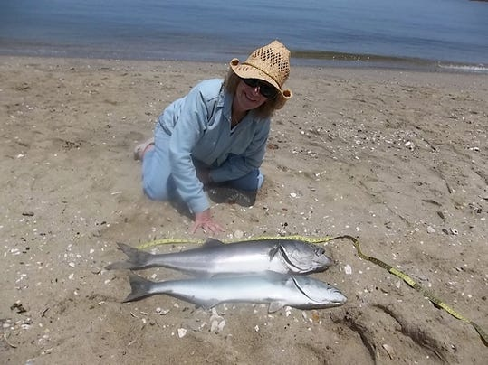 Bluefish pull another disappearing act for Sjfc fish r net