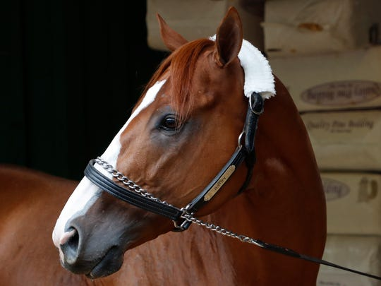 Kentucky Derby winner Justify stands in the Preakness Barn after arriving at Pimlico Race Course in preparation for the 143rd Preakness Stakes.