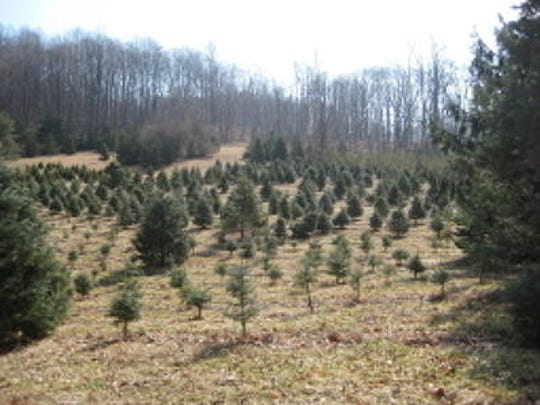 Governor Christie proclaimed Nov. 30 as Jersey Grown Christmas Tree Day, which encouraging New Jersey residents to support the state's farmers and visit choose and cut Christmas tree farms, as well as showing appreciation of our military during the holiday season.