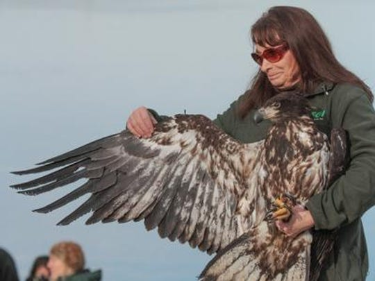 Marge Gibson from the Raptor Education Group, Inc. in Antigo displays the size and shape of an eagle's wing at the 28th annual Bald Eagle Watching Days held in Sauk Prairie on Jan. 17.