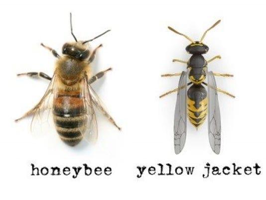 636650972170814364-bees.jpg