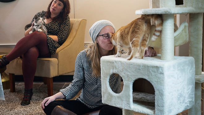 """Brittany Pearson sits in the """"Cat Loft"""" as she plays with rescue cat Zinfandel at the opening of Colony Cat Cafe in Pittsburgh's Strip District. Zinfandel was recently adopted, according to the Colony Cafe's Facebook page."""
