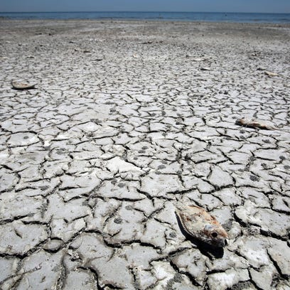 The Salton Sea has been shrinking for years, leading to mass fish die-offs.