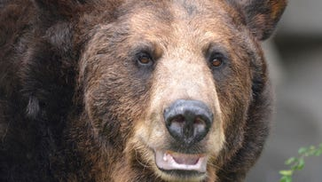 Detroit Zoo says bye-bye black bear (and brown bear), giving grizzlies more room