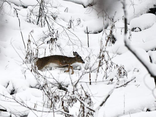 MNCO 0113 Dick Martin deer hunters feedback to Ohio.jpg