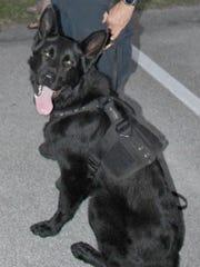 Diesel, Sebastian Police Department K-9 officer