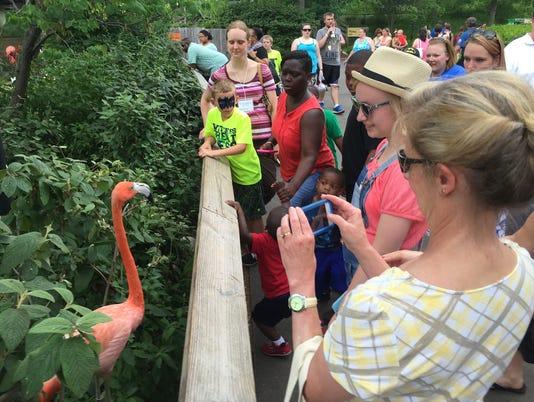 636364802230658622-IndianapolisZoo-Flamingo.jpg