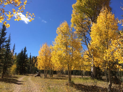 Walking along the Arizona Trail north of the East Rim