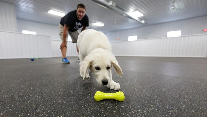 Dog trainer Jake Guell works with a golden retriever puppy at his new Tails for Life location, W7074 Penny Lane, west of North Fond du Lac. The business trains service dogs for children.