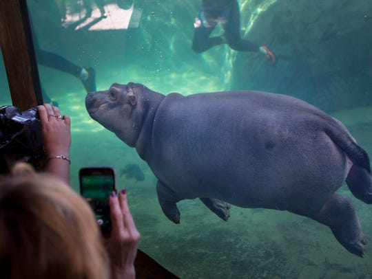 Fiona made a her debut to the media in Hippo Cove at