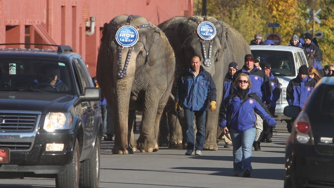 Ringling Bros. and Barnum & Bailey circus elephants make their way from Canal Street to Court Street on Oct. 29, 2013.