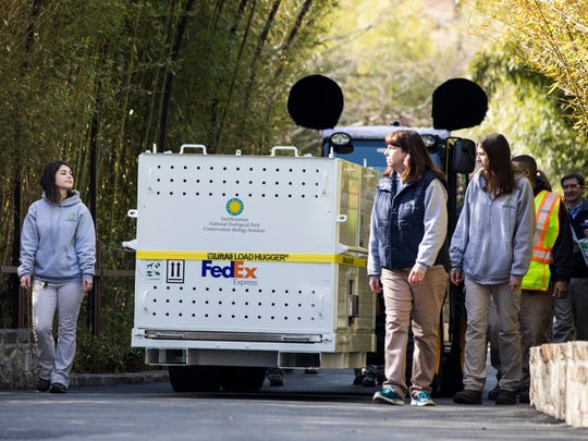 In 2017, Smithsonian National Zoo workers move Bao Bao, inside the white crate, out of her enclosure to a waiting FedEx truck for the ride to Dulles Airport.