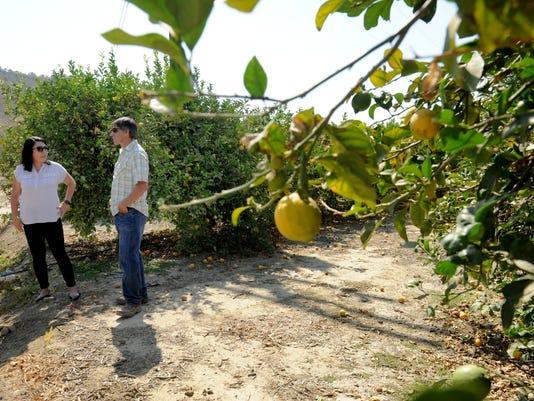 Santa-Paula-Farm-1.jpg