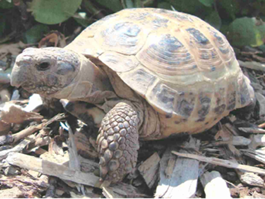 636361585147631901-Missing-tortoise.png