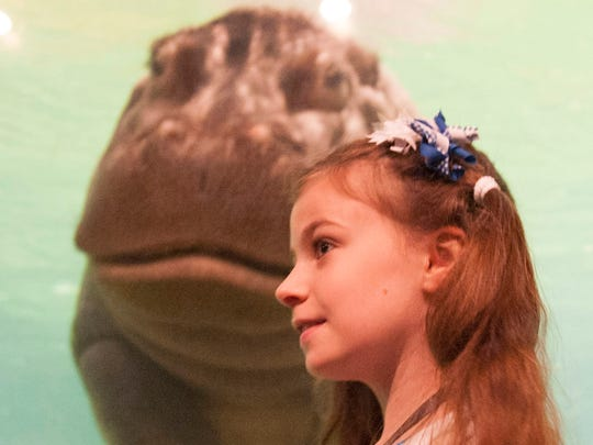 Say  hello to Genny, a 4,000-lb. hippo, at Adventure Aquarium in Camden.