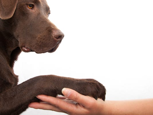 APC f FF quality dog tricks 0207.jpg