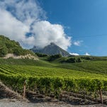 At Domaine des Muses in Sierre, Robert Taramarcaz's wines deserve attention based on the merit of the juice alone.