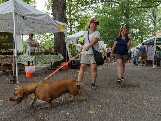 Ginger, 2, a bassett hound mix, pulls Stacie Eddington
