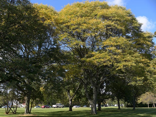 Residents living around Poppleton Park say they're concerned about cutting down a number of mature trees for a parking lot.