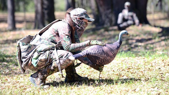 Lots of detail, like setting up a decoy in the right position, goes into Florida turkey hunting. Project support from the National Wild Turkey Federation around the state has helped produce good populations of the Florida Osceola sub species.