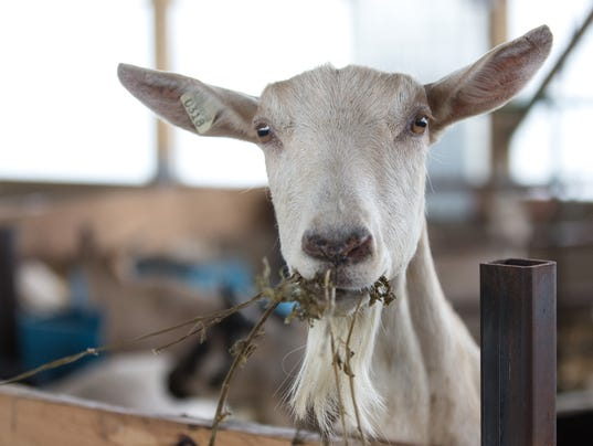 R Goats From moo to ma-...