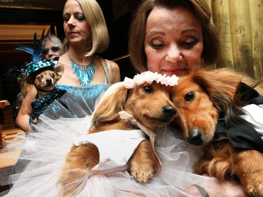 Dachshunds are dressed for the occasion, Dee Dee (foreground left) and her cousin Clifford (foreground right) are held by their owner Valerie Diker, as they and other dogs and people wait for the start of the most expensive wedding for pets in New York.