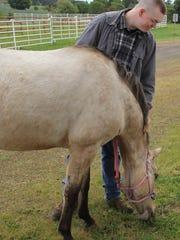 Garrett Kincaid of Lyons walks a horse at the Horses