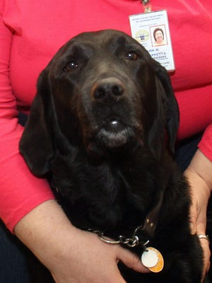Veterans counselor Ann Chiappetta's seeing-eye dog Verona is retiring after years of service.