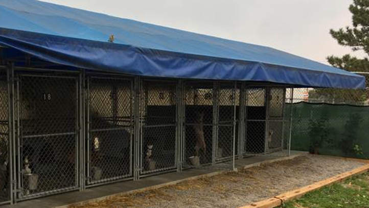 Animal shelter accused of neglecting pit bulls promises to make changes