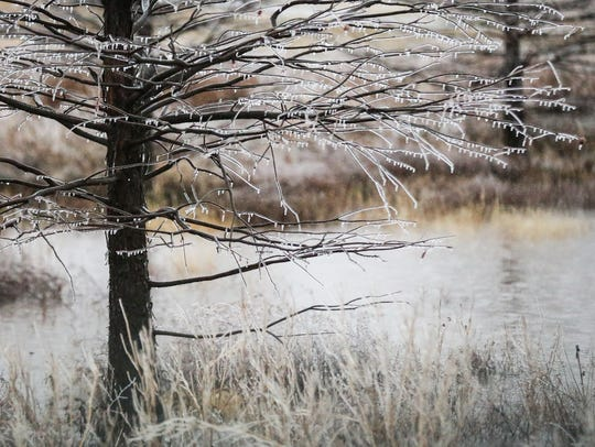 Hoarfrost covers vegetation near the Red Arroyo Wednesday,