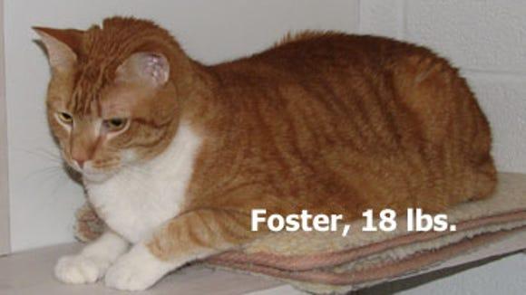 foster-18