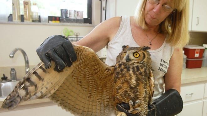 The Florida Wildlife Hospital & Sanctuary is in need of all sorts of supplies this holiday season.