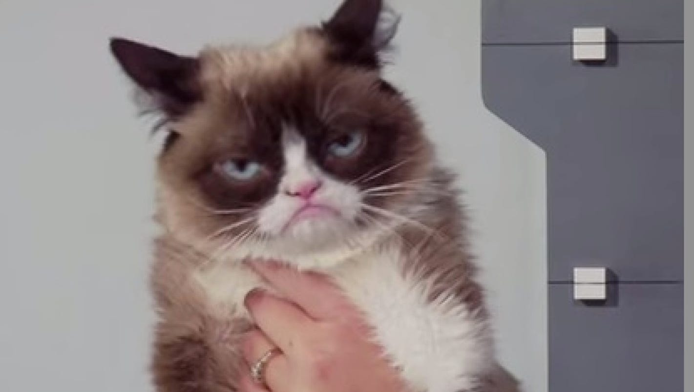 grumpy cat to be e wax figure