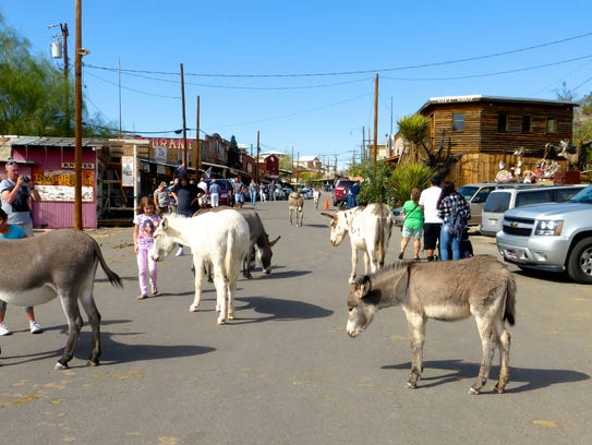 A herd of burros from the surrounding hills wander