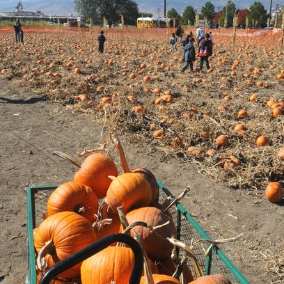 Top 5 pumpkin patches, fall festivals in Northern Nevada