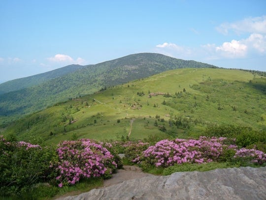 A view from Jane Bald on Roan Mountain. The Asheville-based Southern Appalachian Highlands Conservancy will lead a variety of free hikes in the Highlands of Roan June 11.