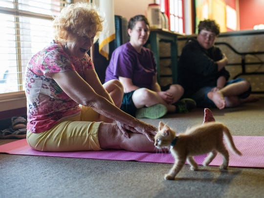 Participants, accompanied by kittens, perform various poses during a Yoga with Cats session at Jerusalem Christian Church in Lafayette, La., Tuesday, Sept. 22, 2015. The yoga class is held by Acadiana Animal Aid and the church.