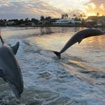 Natural habitat, family friendly outings make dolphin cruises great option for fun