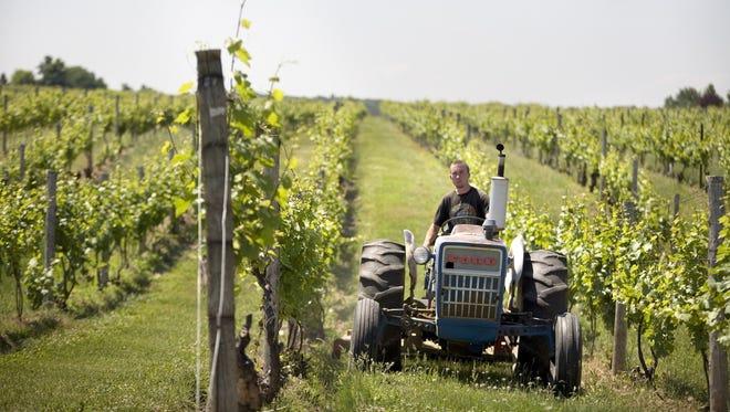 Jonathan Chase of Fairport rides through the vineyards at Casa Larga in Perinton on June 12, 2007.
