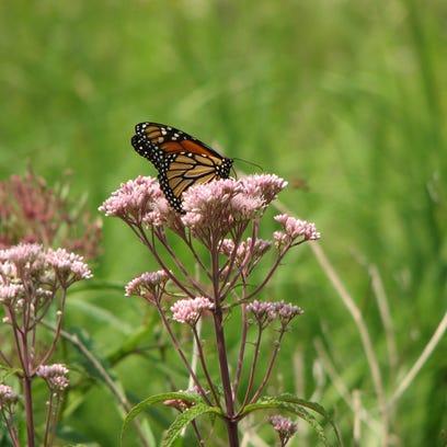 Plant a native prairie for an urban landscape
