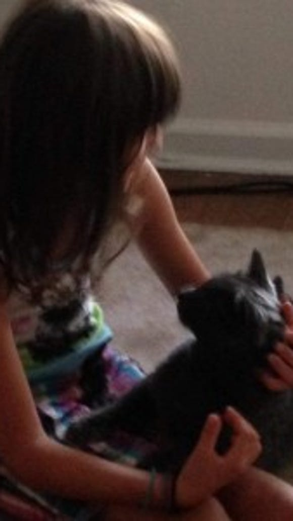 """""""But no one can resist an 8 year old cat lover!"""" writes Beth Jones of Yorkana, who adopted Grey."""