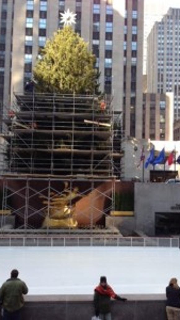 The Christmas tree on Rockefellar Plaze could use a little decorating help. Tree will be lit on Wednesday, December 2.