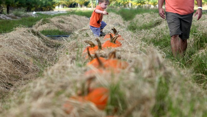 Annual pumpkin patch. This image was originally taken in Oct. 2015.