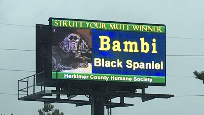 A photo of Bambi, the top vote-getter in the Herkimer County Humane Society's online Strutt Your Mutt contest, is showcased on Fiberdyne's  LED billboard on Route 5S. SUBMITTED PHOTO