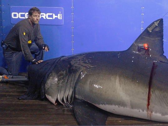Shark Attack Odds (2)