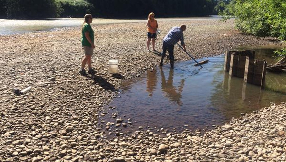 Fish stranded in puyallup river due to low water levels for Puyallup river fishing