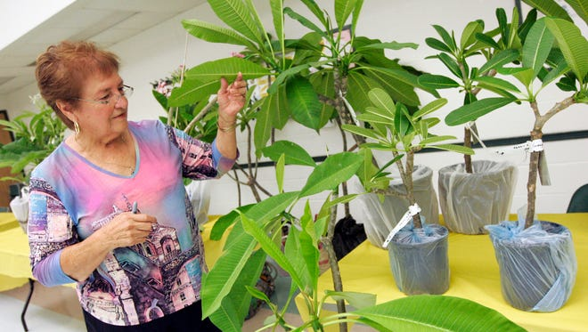 The Plumeria Society of South Texas will hold its annual plumeria sale from 10 a.m. to 1:30 p.m., Saturday, July 22, at the Garden Senior Center, 5325 Greely Drive. Plumeria starts and fully-potted plants, grown by Plumeria Society members, will be for sale. Proceeds benefit plant care and maintenance of the South Texas Botanical Gardens plumeria collection, curated by the society. Cash, checks or credit cards accepted. Cost: Free to attend; plumeria prices depend on plant size. Information: 361-779-3181, psstcorpus@gmail.com, www.facebook.com/psstcctx.