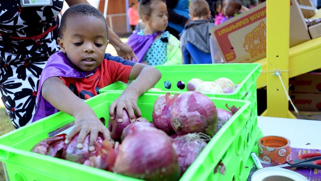 """Kameran Griffin from North Franklin Head Start program picks produce from the """"Farm to Belly"""" Market. The program, a collaboration between Greenville Health System, Feed & Seed and several other community partners, is competing for a USA TODAY Network Community Thrives grant that would help grow the program locally and eventually statewide."""